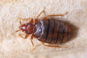 Bed Bug and Pest Control Service