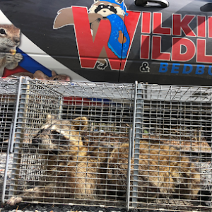 wildlife removal and trapping